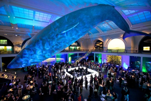 Hall of Ocean Life. Photo Credit: Zeal NYC.
