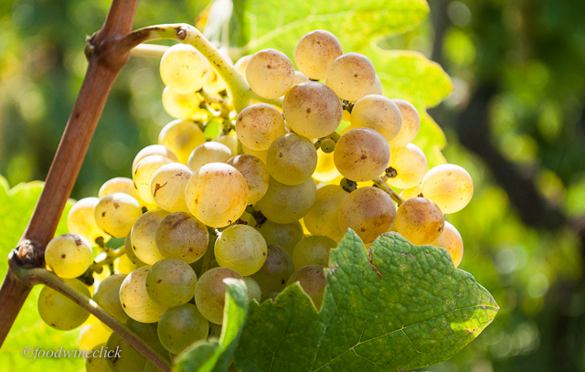 Roussanne Grapes. Photo Credit: Foodwineclick